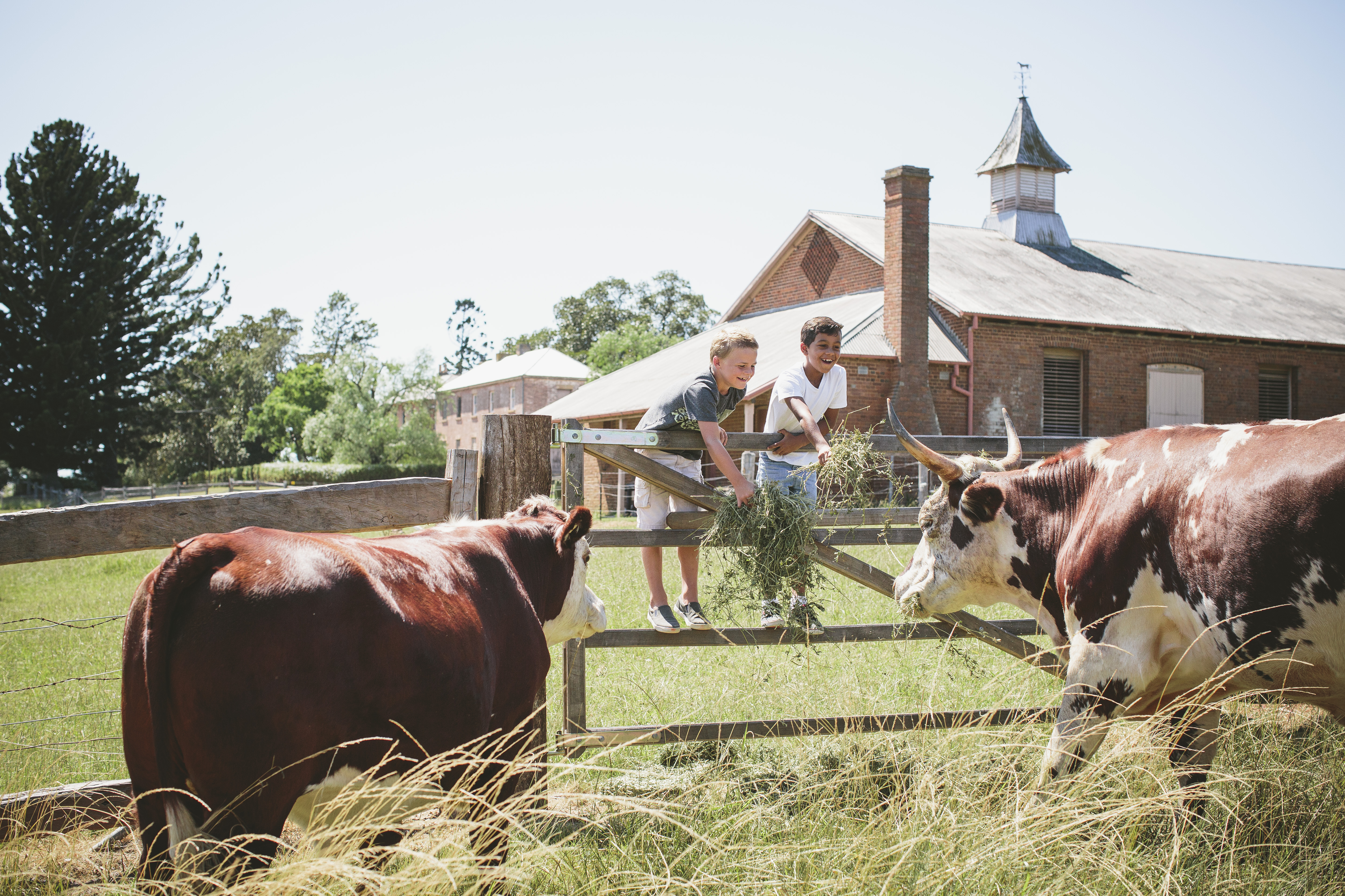 kids standing on a gate feeding cows at Rouse Hill Farm