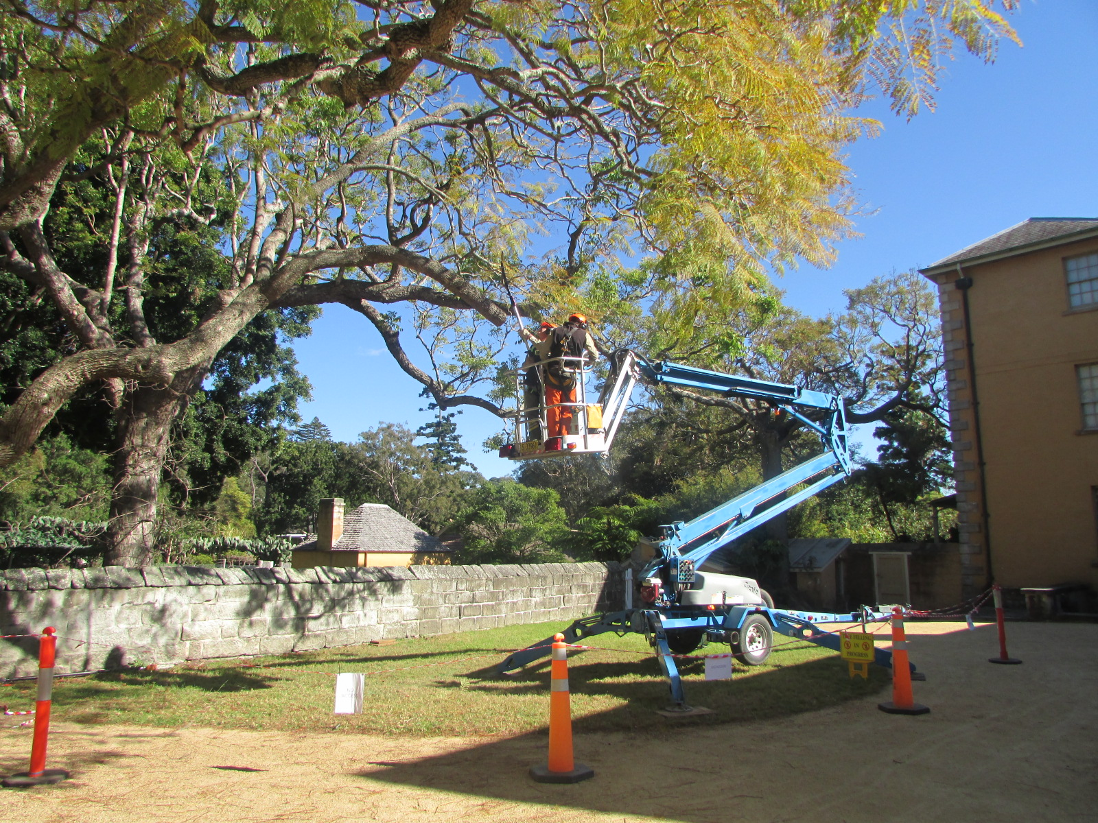 Men in crane accessing tree branch.