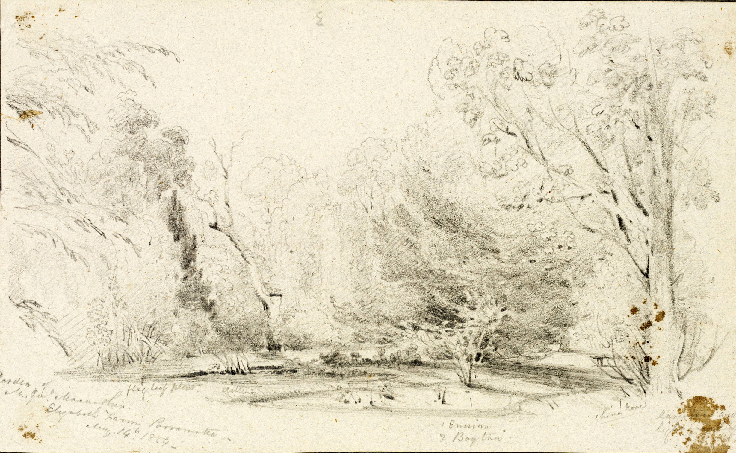 Faint pencil drawing of trees on discoloured paper with spidery handwriitten annotations.