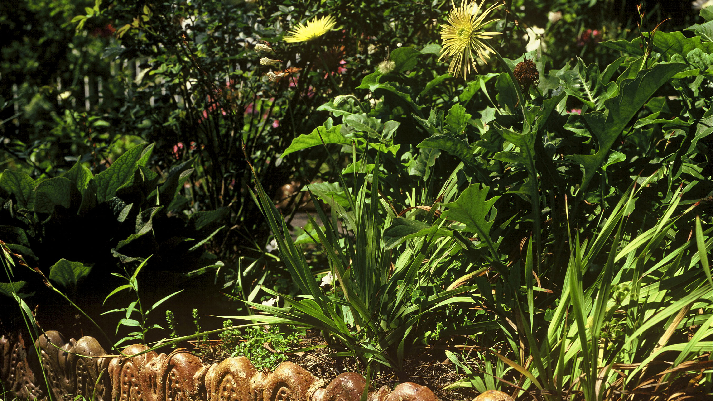 Close up view of a garden with ceramic edging tiles visible in one corner with flowering plants and shrubs in the garden bed.