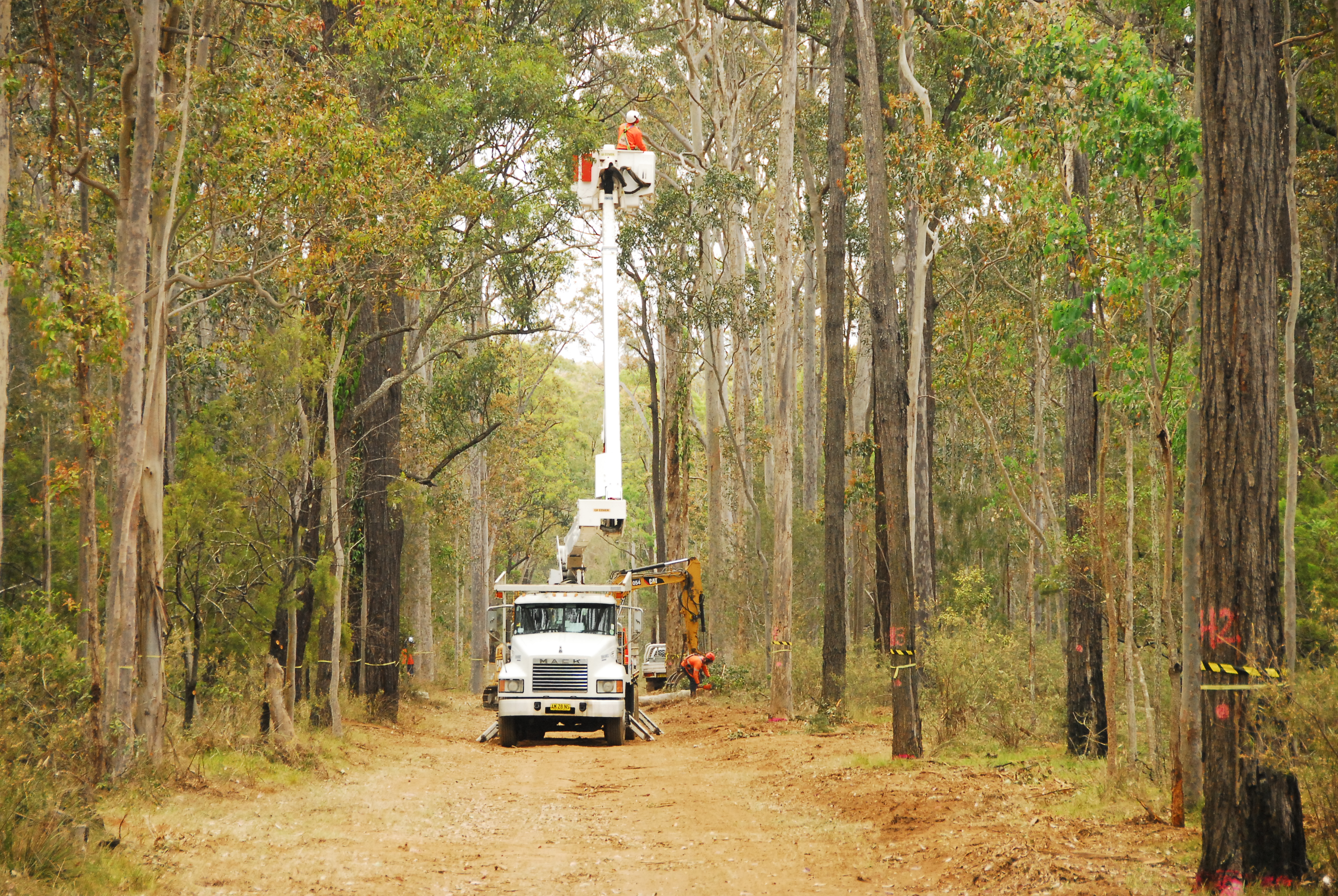 Cleared road in bushland with truck in distance, with man on extendable platform at tree top level.
