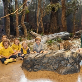 Interior photograph of students, and staff inside one of the habitat learning spaces at the Taronga Institute of Science and Learning with a quokka.