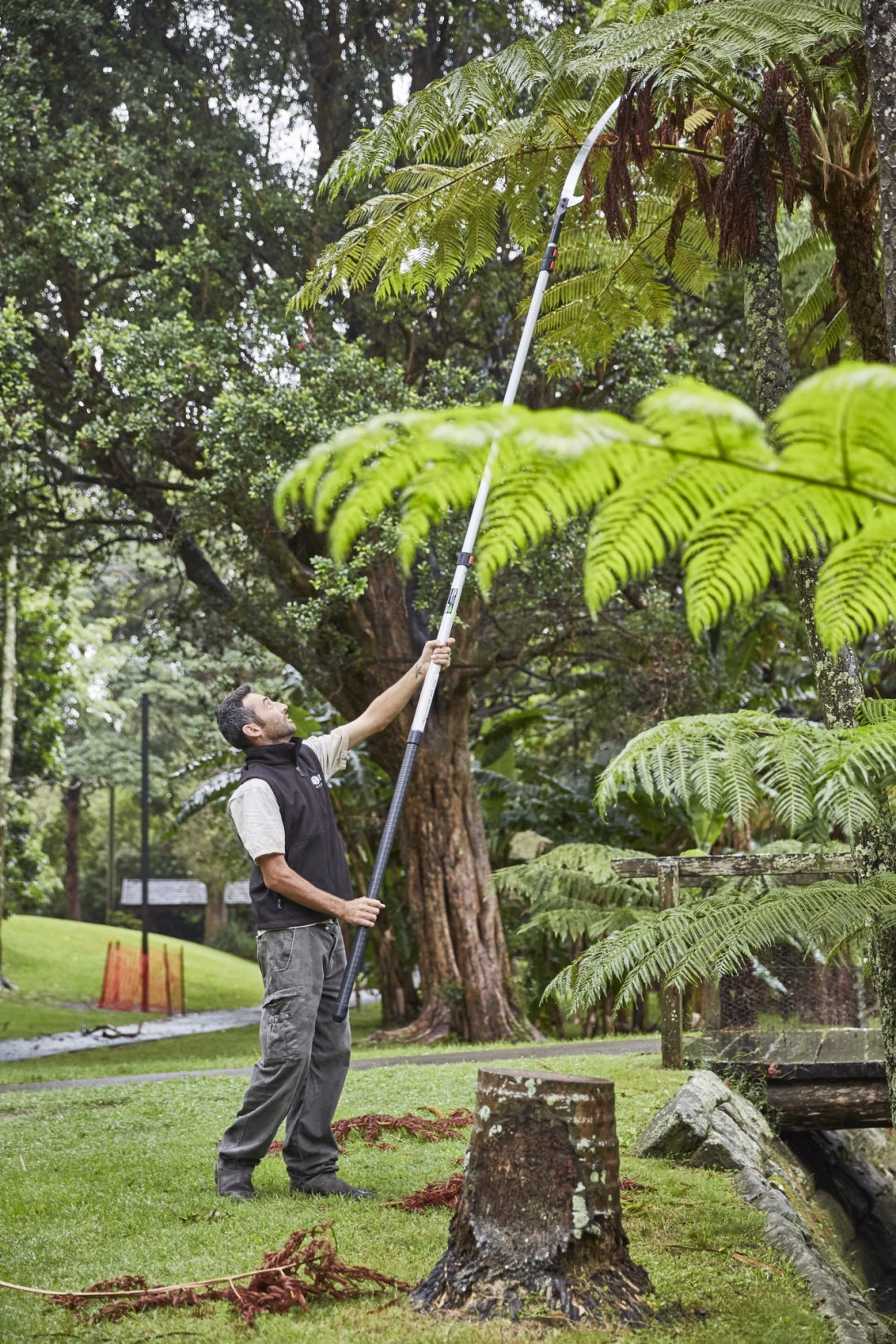 Horticulturist Leigh removing dead fronds with a pole pruner
