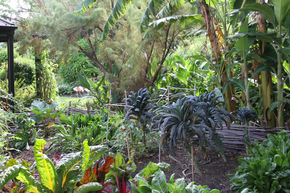Photograph of a vegetable patch in front of a verandah.
