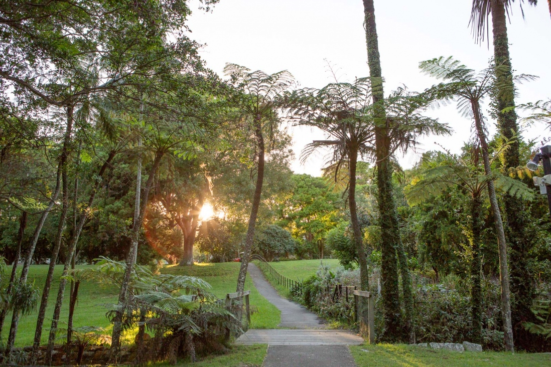 Garden with sunset through trees.