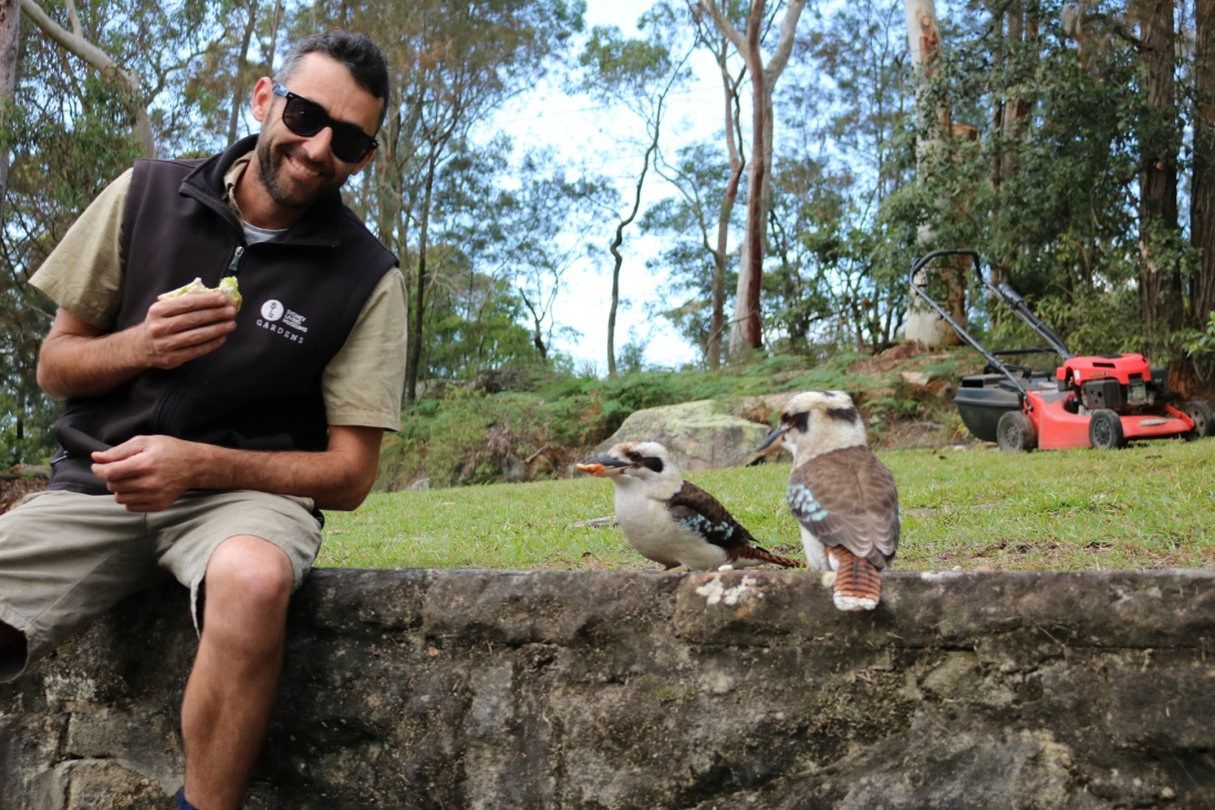 Two kookaburras sit on the wall next to Leigh eagerly awaiting any food