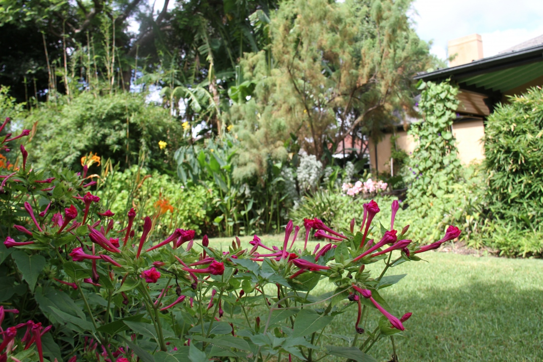 Photograph of bright pink flowers on a green garden background.
