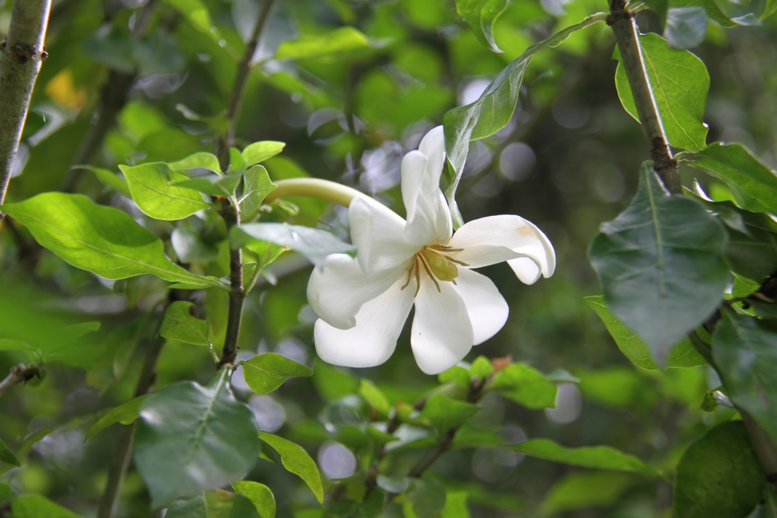 Photograph of a white flower on a green background