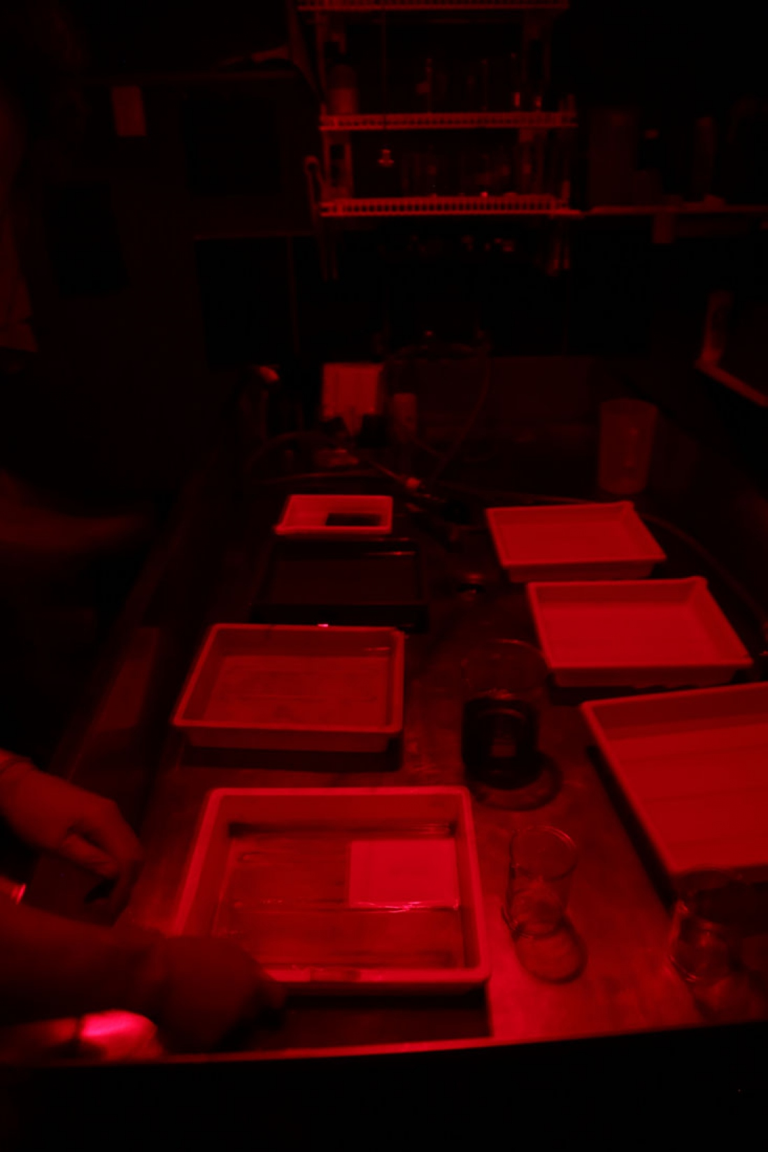 Red light over rows of trays.