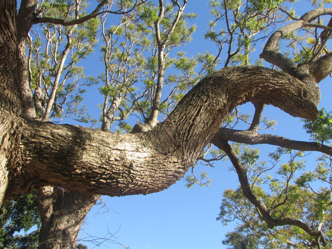 Looking up at damaged branch.