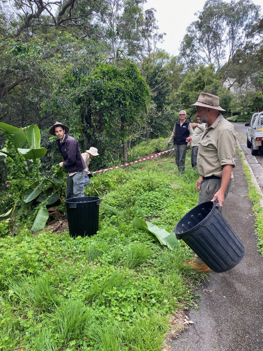 the Gardens Team of Sydney Living Museums work on the bush curtilage of Vaucluse house, they are filling bins with weed species.