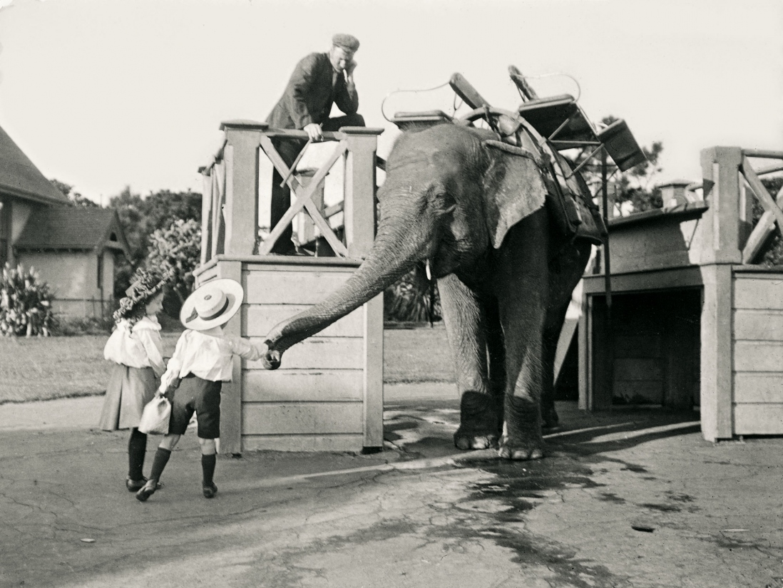 Children reach to the outstretched trunk of an elephant at the Moore Park Zoo