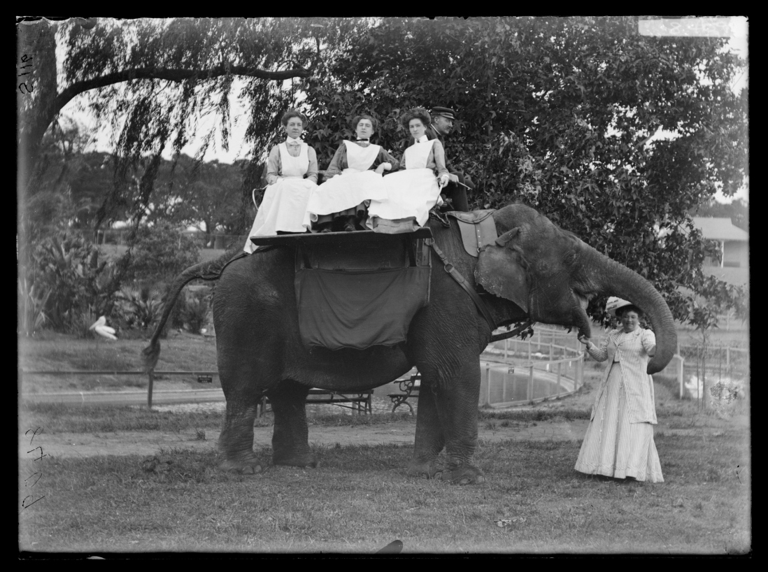 Three women sit on top of an elephant at Moore Park Zoological Gardens
