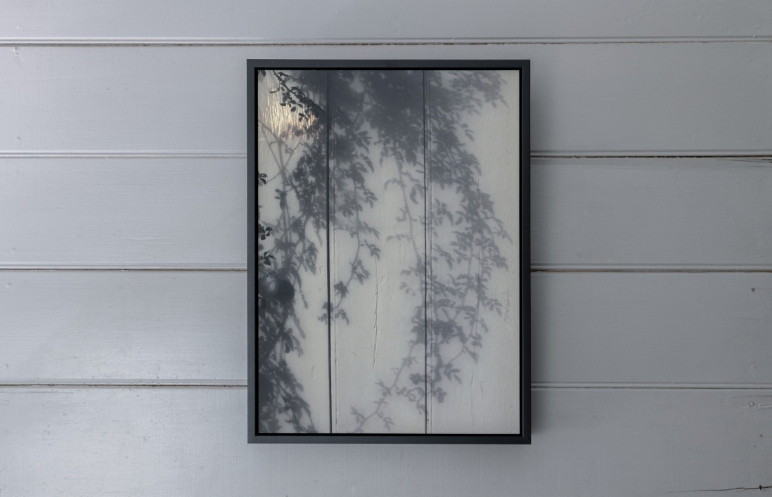Photo of tree in frame on wall.