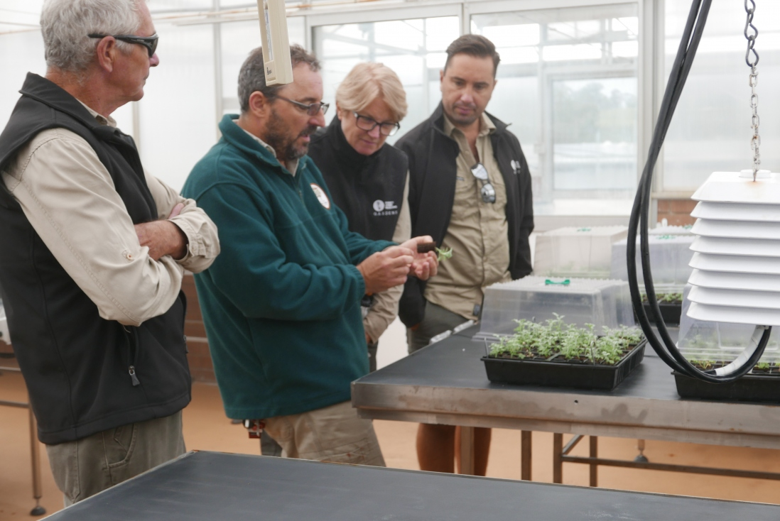 Mark from the Australian Botanic Garden shows the SLM gardens team a single propagation in a peat plug