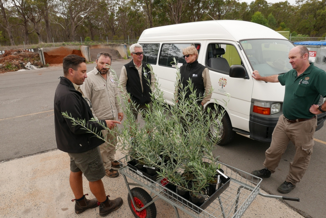 The SLM Garden team gathers around the new olives