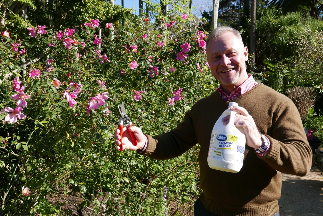 Ian Innes with the bleach and his secateurs before we start pruning
