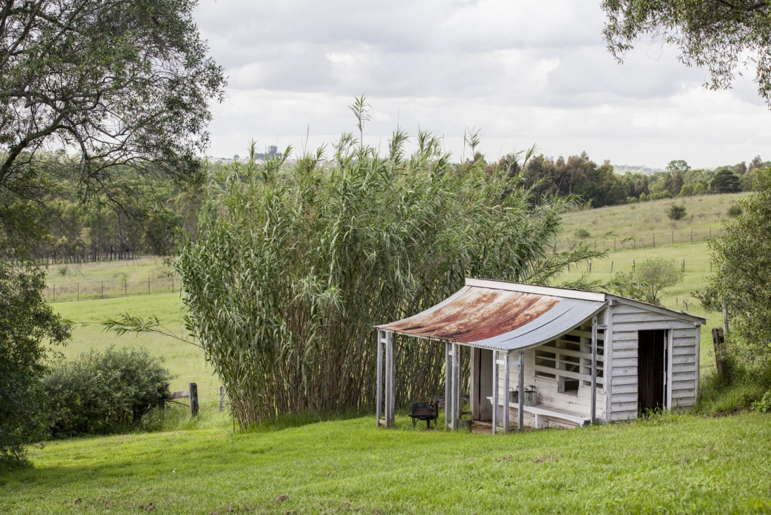 Small building with rusty roof in front of stand of vegetation.