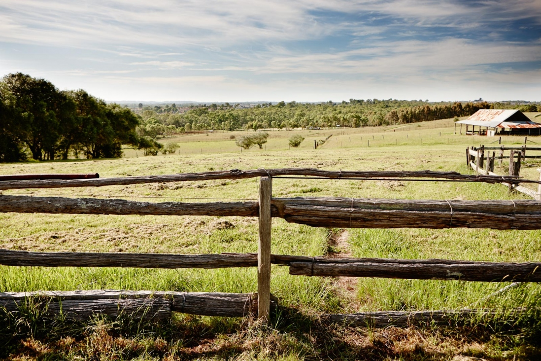 Fence with paddock in background.