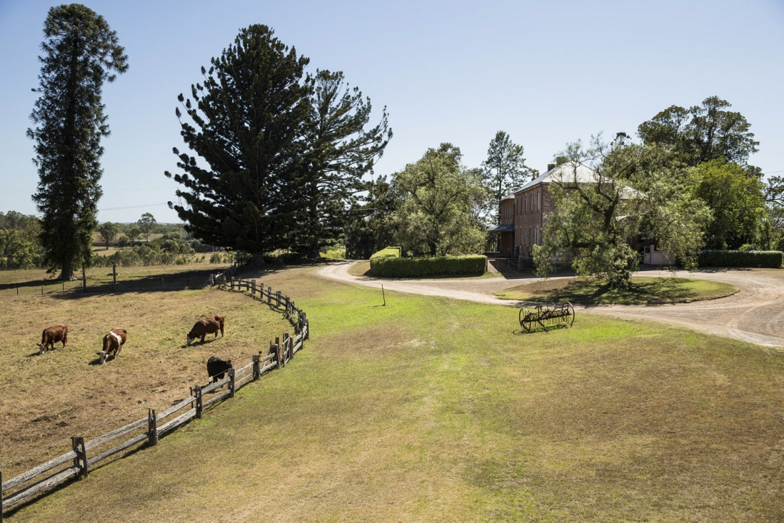 Looking across grass with fenced paddock and cattle to left.