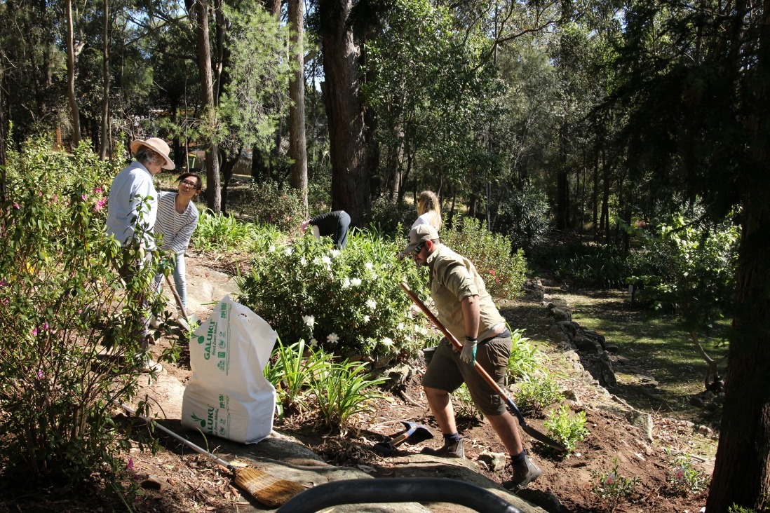 Staff and volunteers planting Azaleas and removing leaf litter at Rose Seidler House working bee 2017