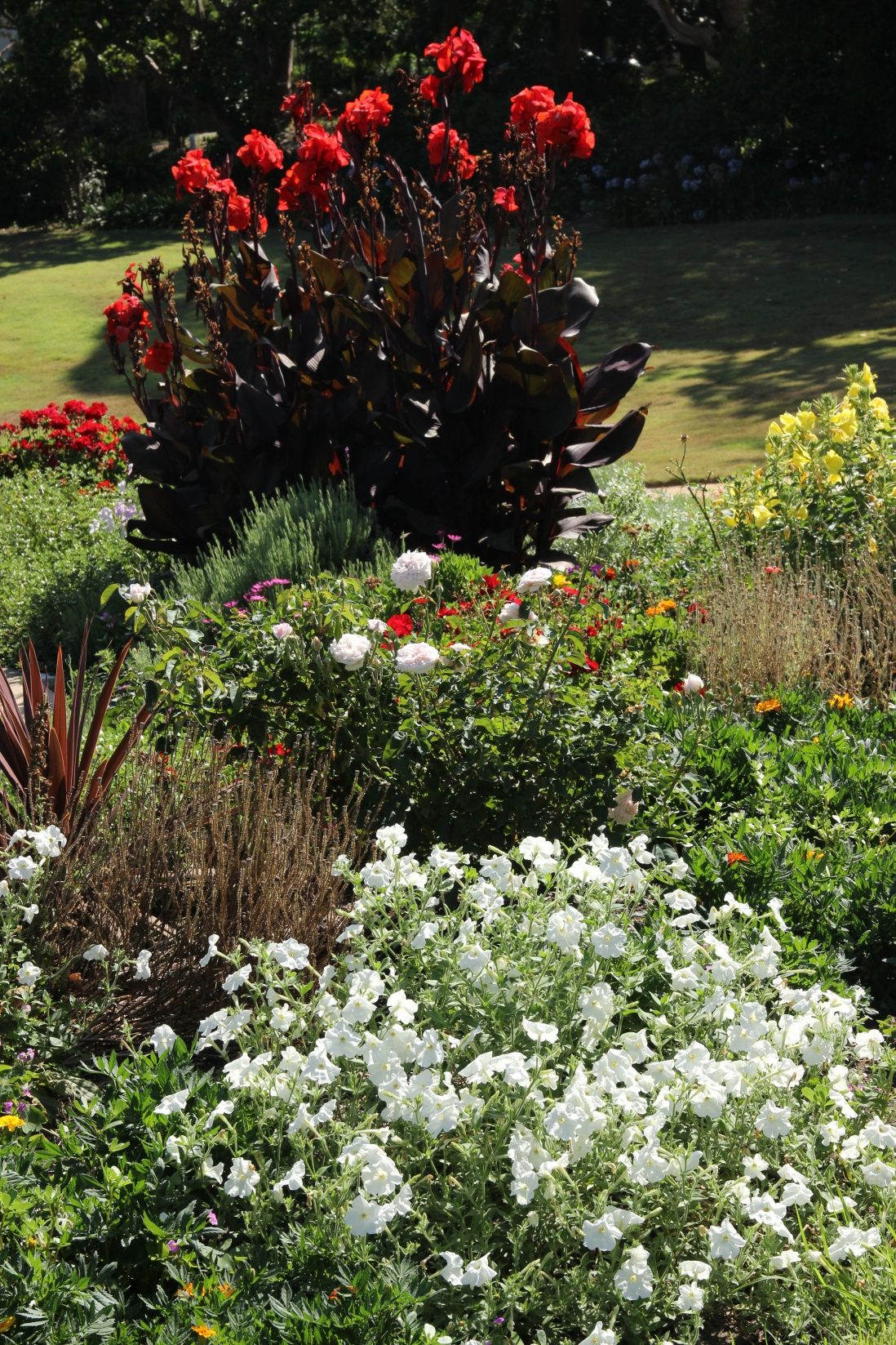 Vaucluse House summer bedding display in the Fountain Garden