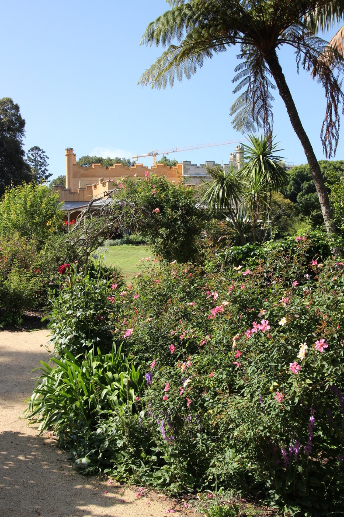 Vaucluse House summer shrubbery and Rosa chinensis var. Mutabilis