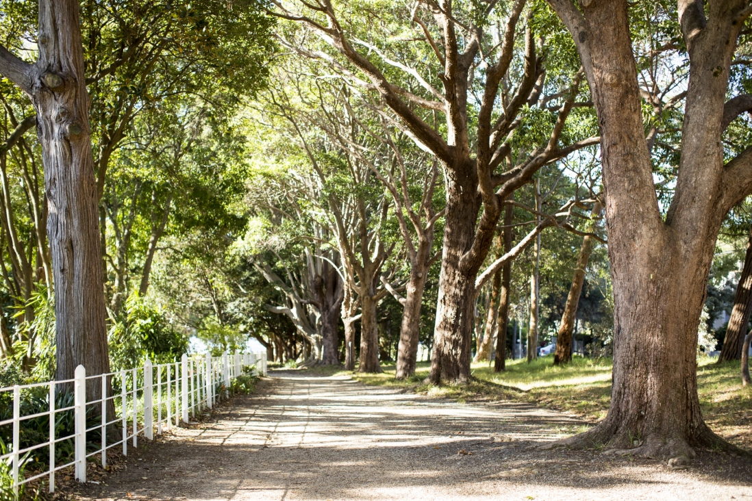 The tree-lined driveway at Vaucluse House