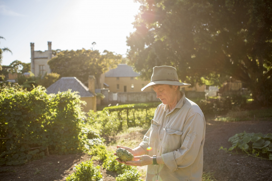 A woman (Anita Rayner) inspects a piece of fruit in the VH kitchen garden. The house can be seen in the background.