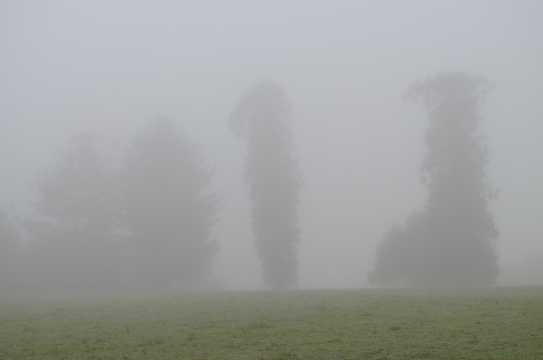 Mist obscuring house and trees.