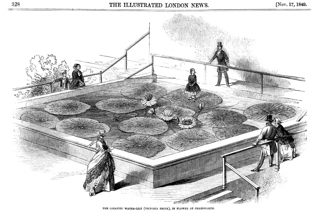 A drawing in the Illustrated London Times showing a giant waterlily taking the weight of a little girl, with other people around the square pond.
