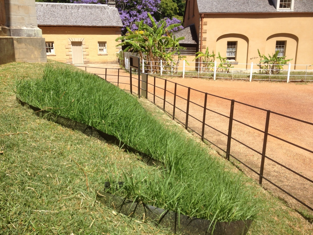 Close up of Mowvember grass moustache, with Vaucluse House kitchen and entry way in the background