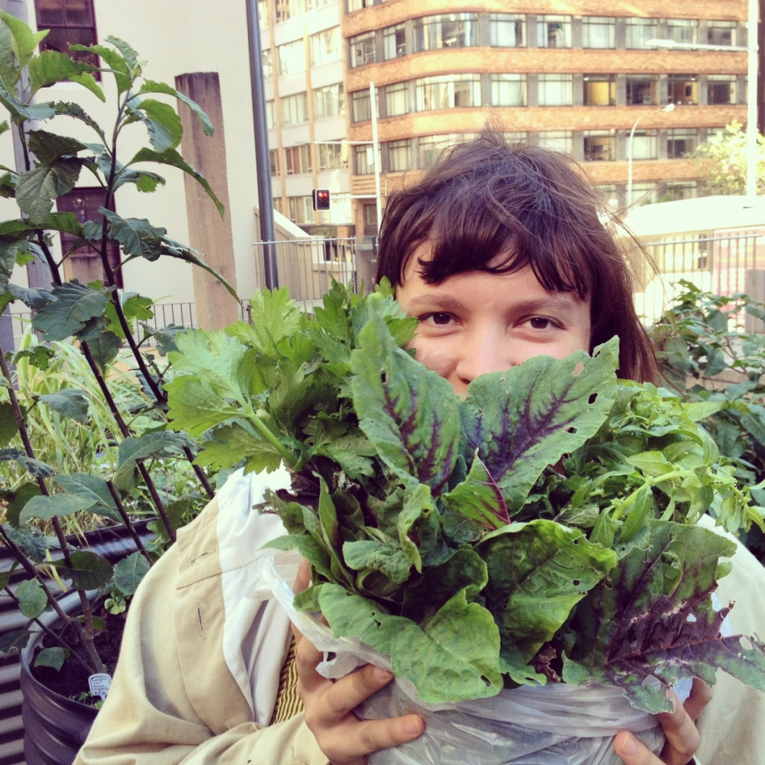 Woman harvesting the plants from the Market Garden