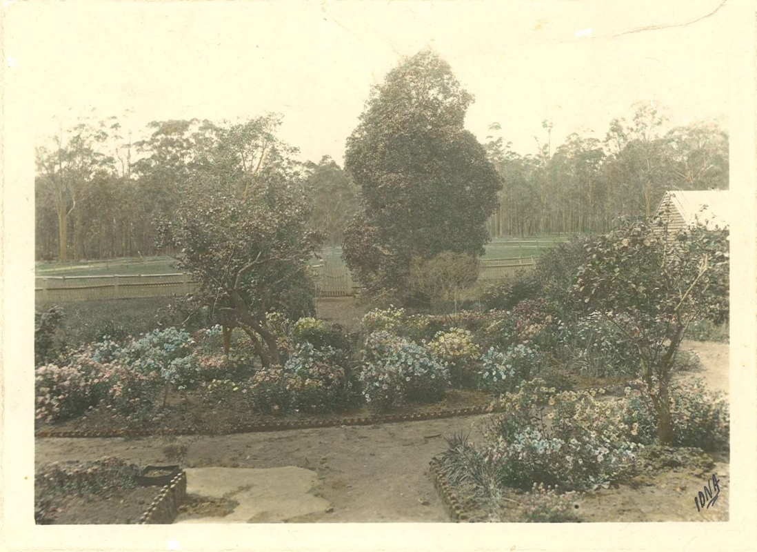 Black and white photo of garden beds and trees in distance, with a yellowish tint.