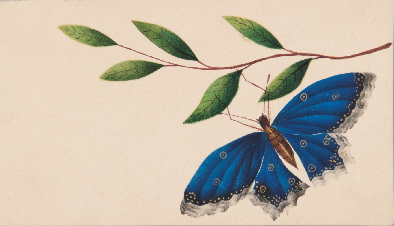 Butterfly and branch: theorem or poonah painting