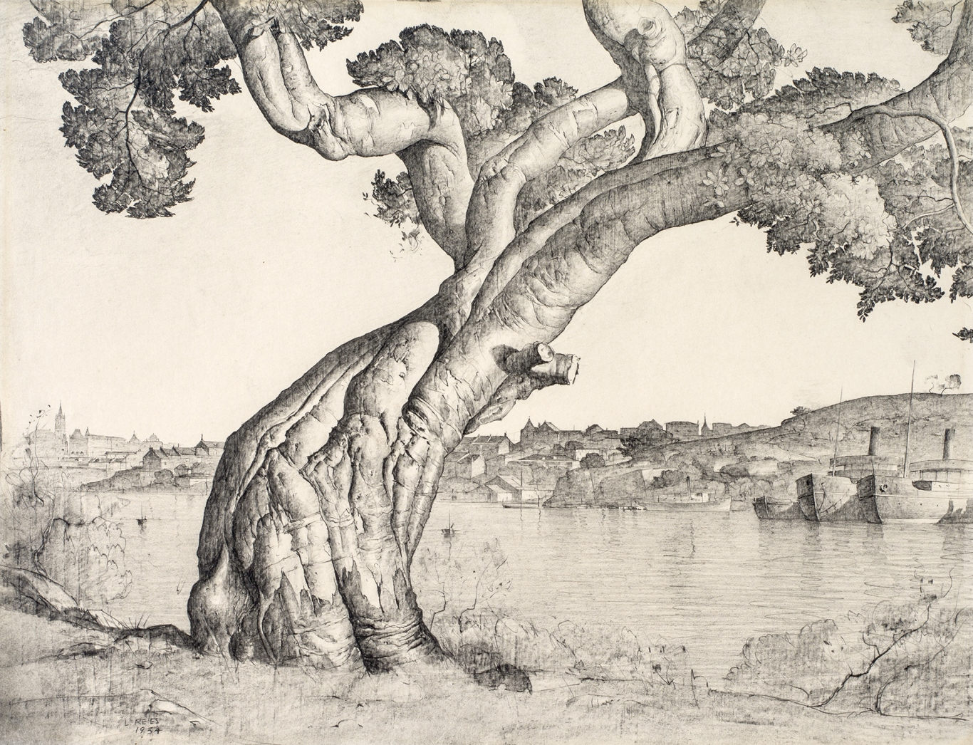 This is a pencil drawing of a fig tree
