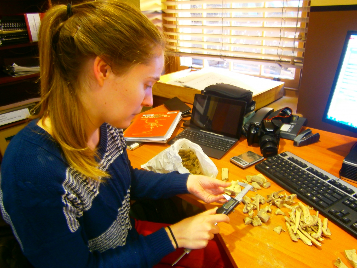 Woman examining collection items on desk.
