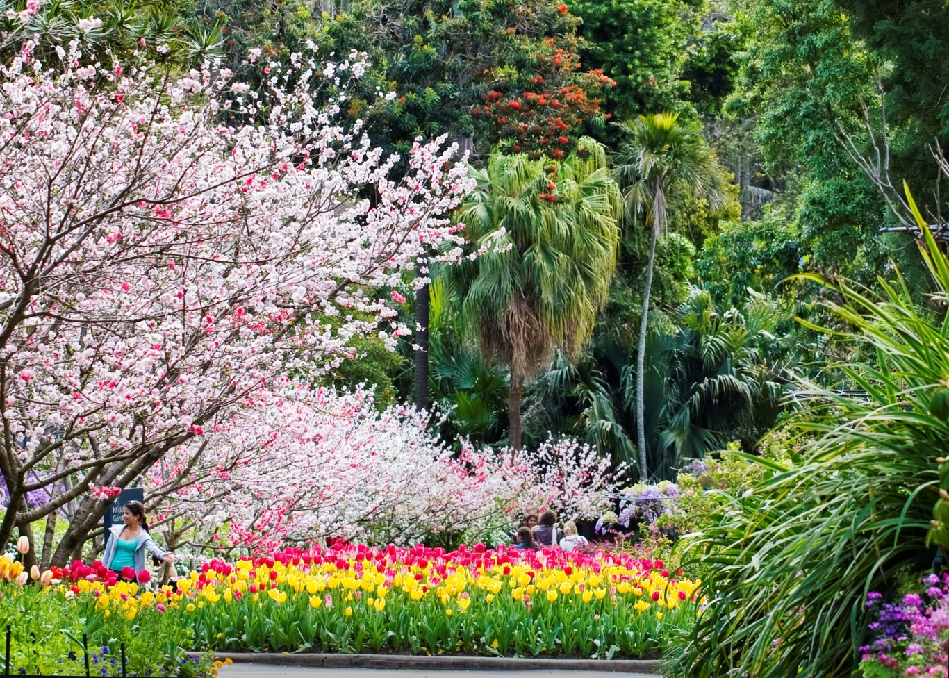 Merveilleux Colour Photograph Of The Royal Botanic Garden, Sydney During Spring.