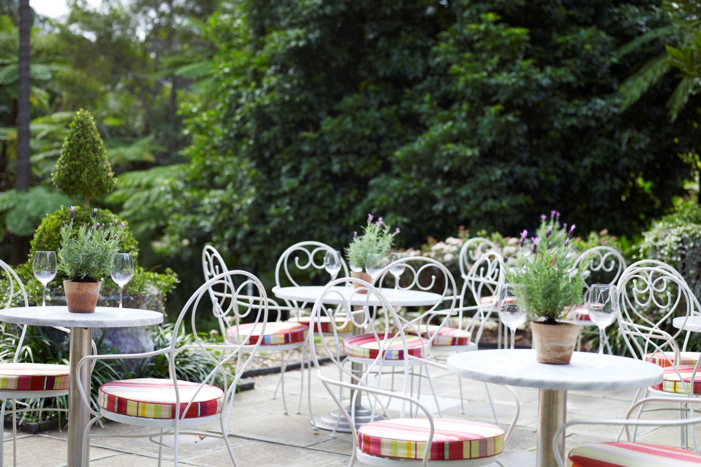 Vaucluse house garden tea rooms in summer. Pots of Lavender sit on the tables surrounded by green hedges