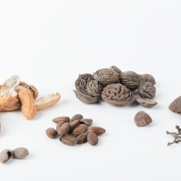 Collection of nuts, seeds and fruit which includes peanut shells, peach seeds, orange peel, a hazelnut shell, plum seeds and a grape stem