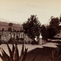 Fifth panel of a five part photographic panorama of Turanville near Scone / photographed by Joseph Check, 1889