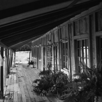 Northern verandah and timber slab walls at Cressbrook homestead, Cressbrook, Queensland, 1968