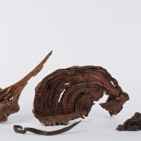 Four pieces of gnarled wood of varied sizes.