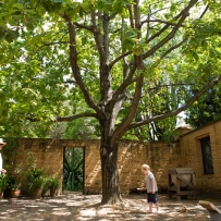 Tree in courtyard with person standing to right.