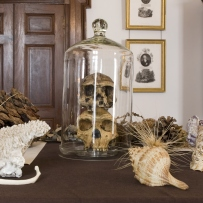 Skulls and other objects positioned as a 19th century display.