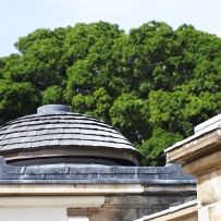 Top of dome with foliage of tree in background.