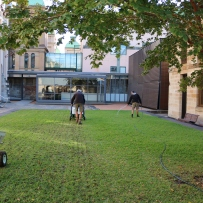 three horticulturists carry out lawn renovations on The Mint lawn
