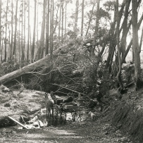 Cart with two horses pauses at a small creek. Tall trees surround the scene with a large fallen tree across the creek directly ahead of the cart.