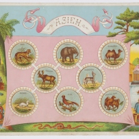 Zoological Lotto: Asien board