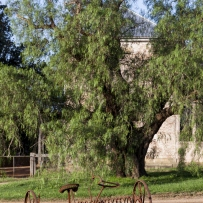 View of tree and building with rusting machinery in foreground.
